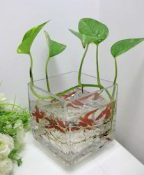 Acrylic Flower Pot