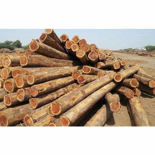 Ghana Sagan Wood, Length: upto 16 feet