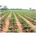 Low Pressure Drip Lateral Irrigation Systems