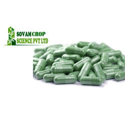 Sovam Chlorophyll Capsule, Packaging Type: Bottle, Packaging Size: 60 Capsule