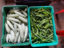 All Fresh Vegetable( For Bulk Shipment & Exports Inquiries)