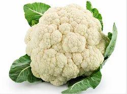 White SG Cauliflower, 1nos
