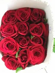 Duch Red Rose