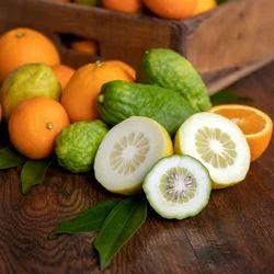 Citrus Reed Fragrance