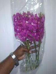 Orchid Flowers Mokara Orchids