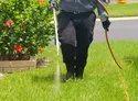Spray Garden Pest Control Services, In Maharashtra
