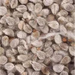 Cotton Hybrid Seeds, For Agriculture, Packaging Size: 750gm