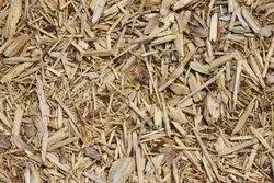 Safeda Waste Wood