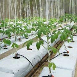 Planter Grow Bag