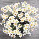 Artificial Gerber Daisy Flowers