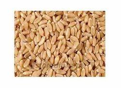 Wheat Local Bansi