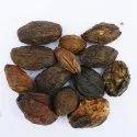 Melia Dubia Or Malabar Vepa Seeds