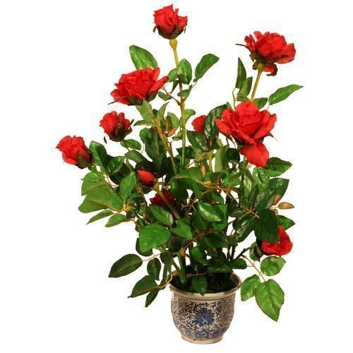 10 Lakh Home Plan >> Red Rose Plant at Rs 12 /piece | Rose Plant - Dhruvi Rose Nursery, Pune | ID: 14877937191