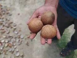 Half Cut Coconut Copra