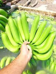 A Grade UP,MP G 9 Banana, Packaging Size: 20 Kg