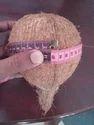 A Grade Pollachi Fresh Coconut