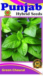 Green Chaulai Seeds ( Saag)