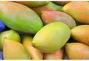 Totapuri Mango Pulp Concentrate
