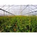 GreenPro Chroma Film
