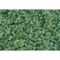 Nagina Green Granite Slab