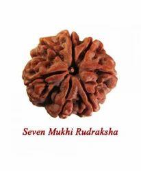 7 Mukhi Rudraksh Beads