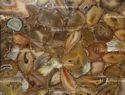 Brown Agate Natural Tiles