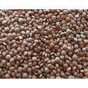 Indian Gram And Masoor Pulses