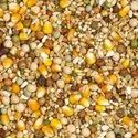 Pigeon Lifecycle Feed: Grain Mixture Format