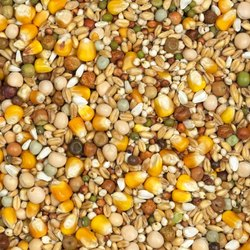 Pigeon Feed at Best Price in India