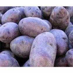 Cool And Dry Place A Grade Kufri Neelkhanth Potato