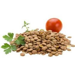 Green House Hybrid Cherry Tomato Seeds