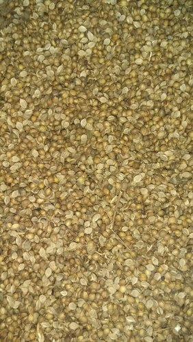 Dried Coriander Seeds, Packaging: 50 kg