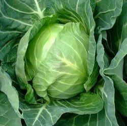 A Grade Fresh Natural Cabbage