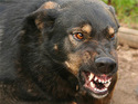 Correcting Dangerous Aggressive Behavior Dog Training Services