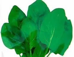 UN Green Leaf Palak Seeds, Pack Size: 1 kg