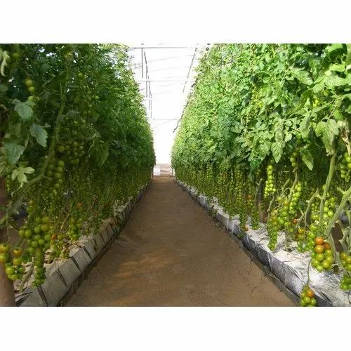 Dome Shaped Soiless Cultivation For Green House, For Vegetable Farming