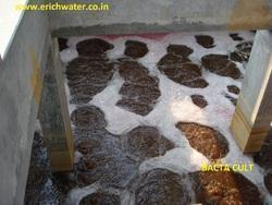 Microorganism For Leachate Of Waste Treatment Plants