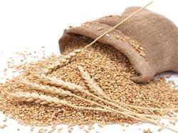 Indian Brown Wheat, 50kg