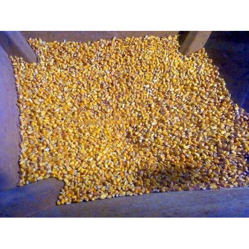 Cattle Feed Maize Grit