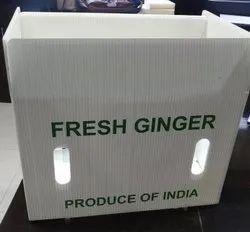 Pp Ginger Plastic Box