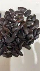 Parkia Timoriana Seeds