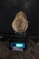 A Grade Pollachi Export Coconut