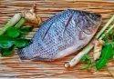Tilapia Fish (biofloc Fish) Wholesale
