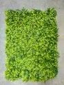 Artificial Grass Mat - Azure Hedges