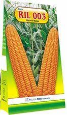 Hybrid Maize Ril 003