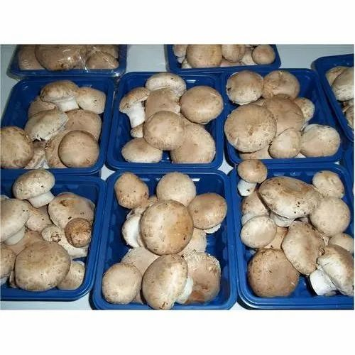 Portobello Mushroom Packaging Type Pp Bag Packaging Size 5 20 Kg Rs 200 Kg Id 7907162973