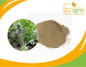 Kutki Picrorrhiza Extract