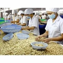 Skilled Finish Cashew Grading Labour Services, Pan India