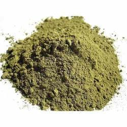 Gorakhmundi Extract Powder