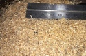Saw Dust Machine / Wood Shredder